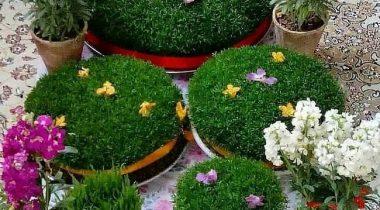 سبزه عید 1400   تزیین سبزه عید با آسان ترین روش به سبک خانم های باسلیقه